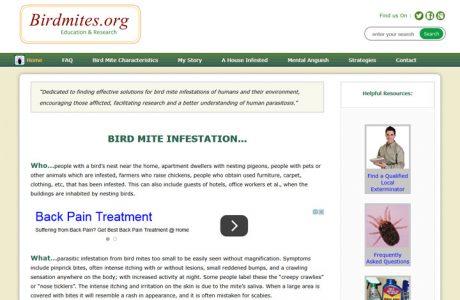Bird-Mite-Infestation